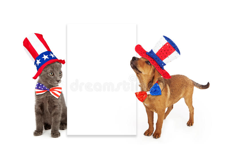 Patriotic Puppy and Kitten Blank Sign. A young kitten and puppy sitting to the side of a blank white sign wearing patriotic American red, white and blue hats and stock photo