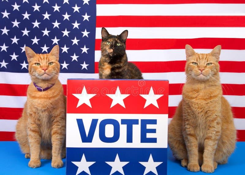 Patriotische Wahltagkatzen am Podium mit Abstimmung unterzeichnen lizenzfreies stockfoto