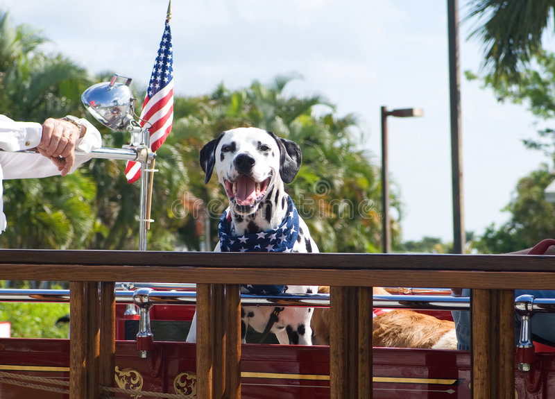 patriotisk hund royaltyfria foton