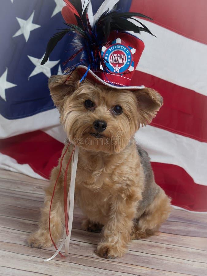 Patriotisk Yorkie hund i bästa hatt i minne av September 11 arkivfoton