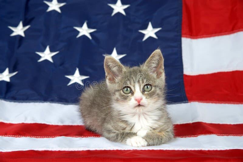 Patriottisch gestreepte katkatje op Amerikaanse vlag stock foto