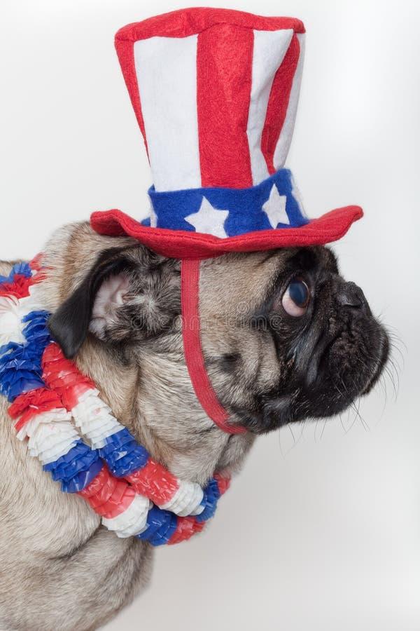 Patriottische Amerikaanse pug hond stock foto's
