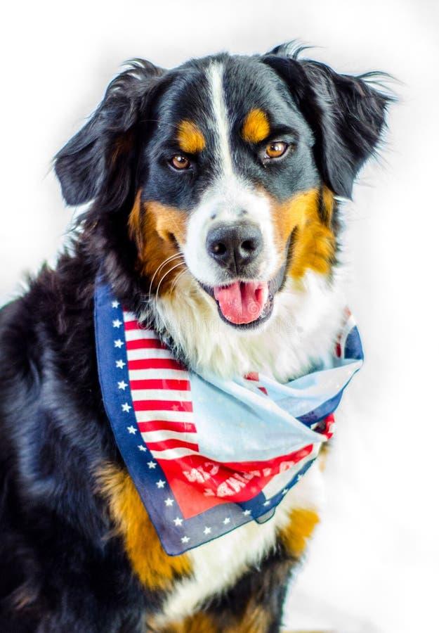 patriotyczny psa obraz stock
