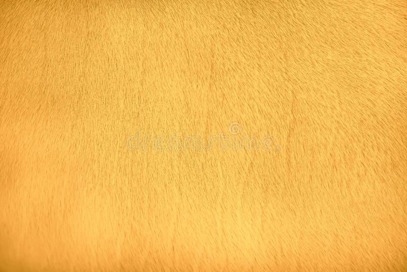 Patronen van aard dierlijk bont, gouden geel of oranje van de achtergrond van de koetextuur stock foto