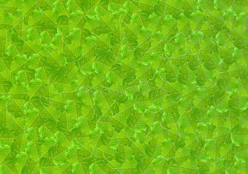 Patroon van de groene vorm van het bladhart royalty-vrije stock afbeeldingen