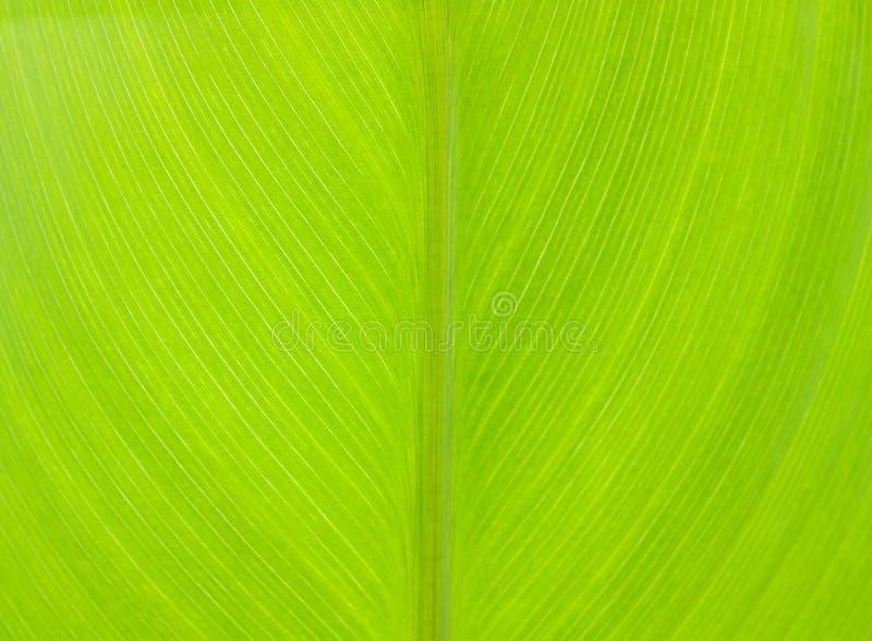 Patroon van groen blad stock afbeelding