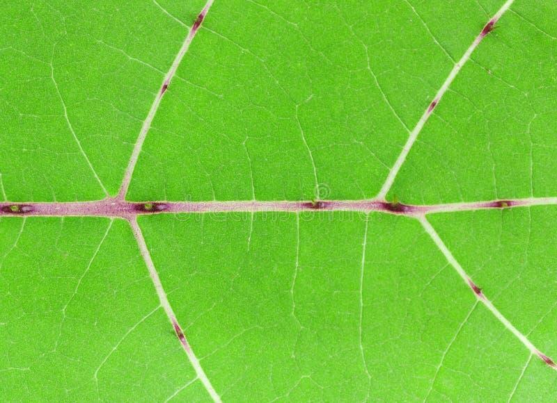 Patroon van groen blad royalty-vrije stock fotografie