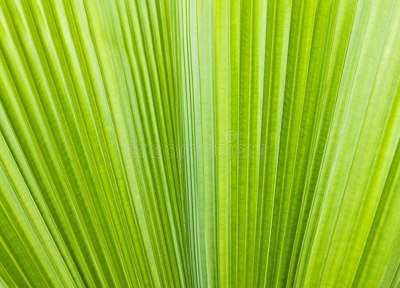 Patroon van groen blad royalty-vrije stock afbeeldingen