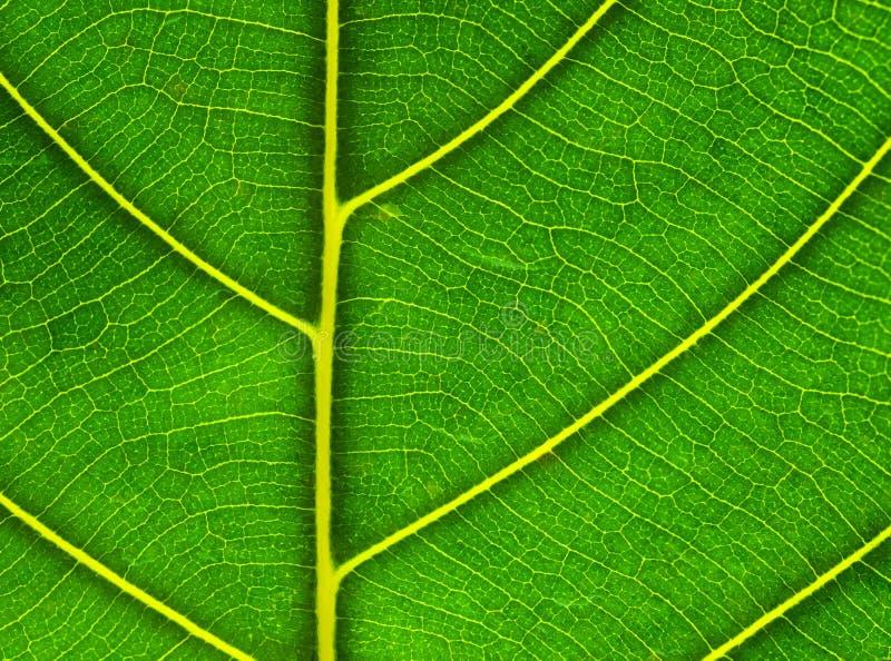 Patroon van groen blad royalty-vrije stock afbeelding