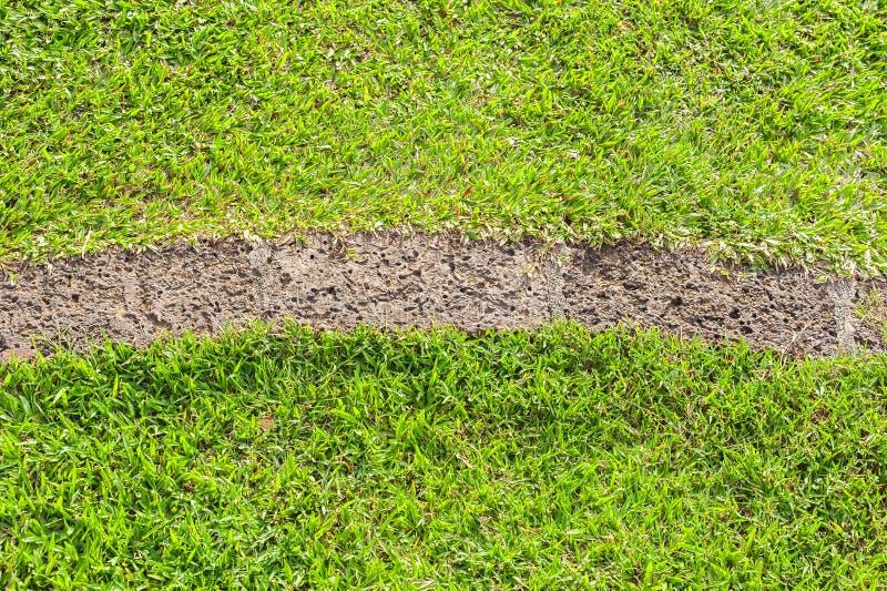 Patroon van groen gras stock afbeeldingen
