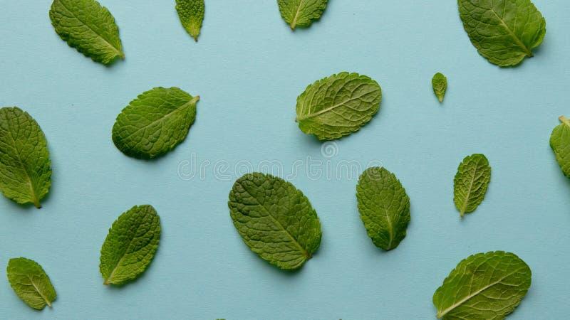 Patroon van groene muntbladeren op een blauwe achtergrond royalty-vrije stock foto
