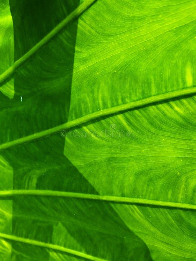 Patroon van lotusbloem stock afbeeldingen