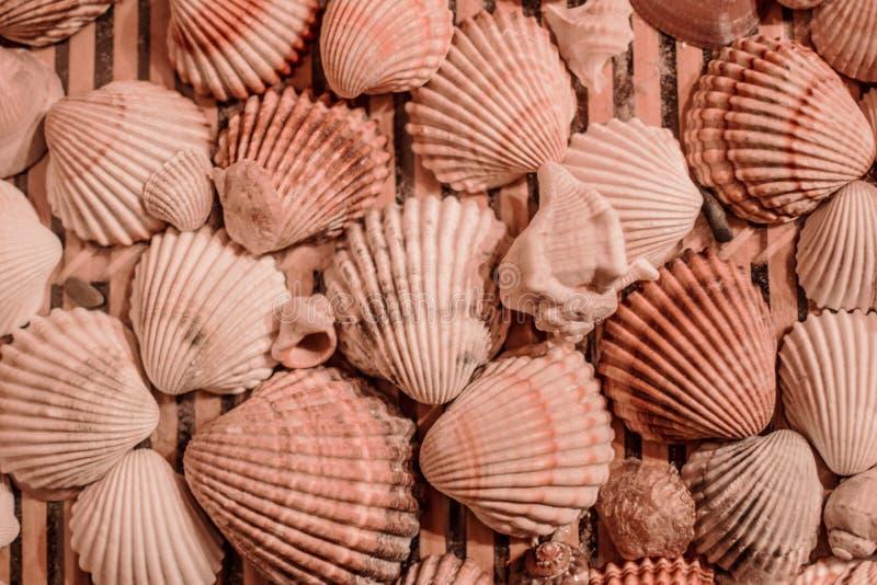 Patroon van shells die op houten platen liggen royalty-vrije stock afbeelding