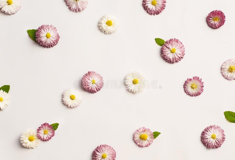 Patroon van witte en roze madeliefjes stock foto's