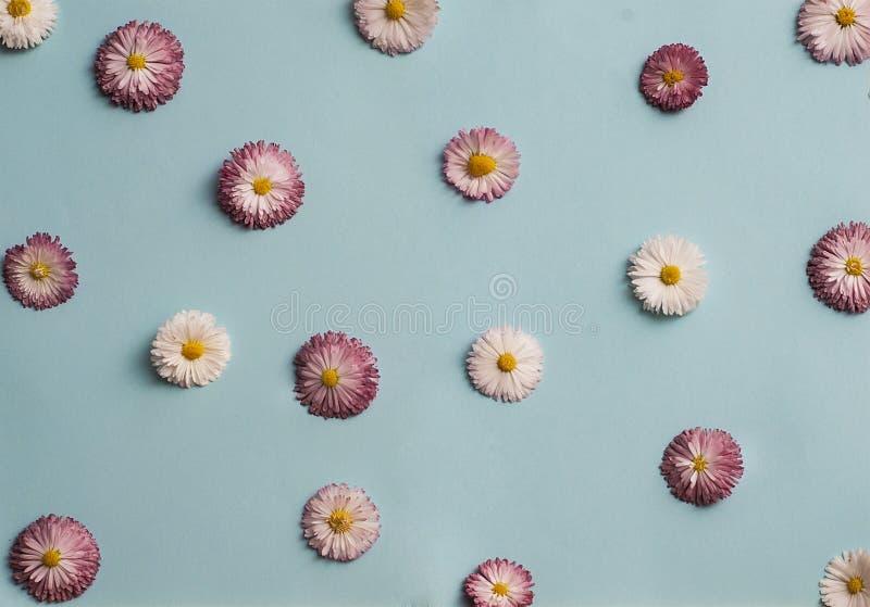 Patroon van witte en roze madeliefjes royalty-vrije stock afbeeldingen