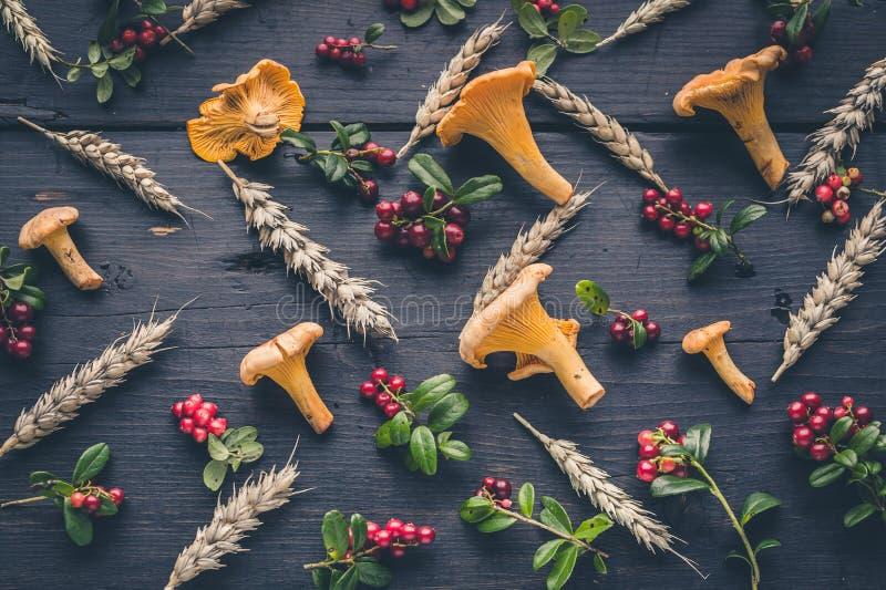 Patroon wilde bospaddestoelen, wilde bessen en tarwe op een donkere houten achtergrond Hoogste mening stock foto