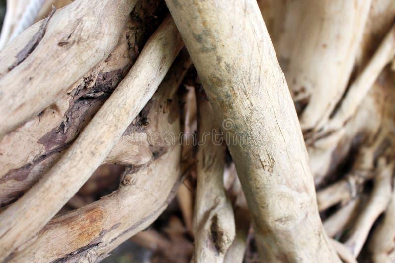 Patroonwortels van verwarde boomwortels stock foto