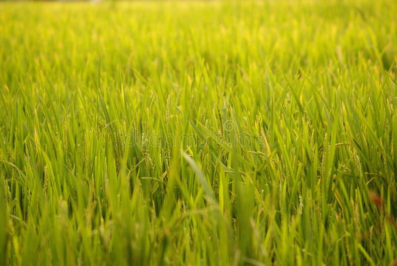 patroszona śródpolna trawy ręki ilustracja zdjęcia royalty free