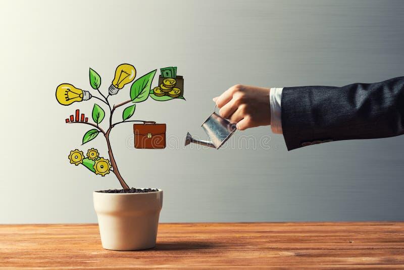 Patroszony dochodu drzewo w białym garnku dla biznesowej inwestyci savings i robić pieniądze obraz royalty free