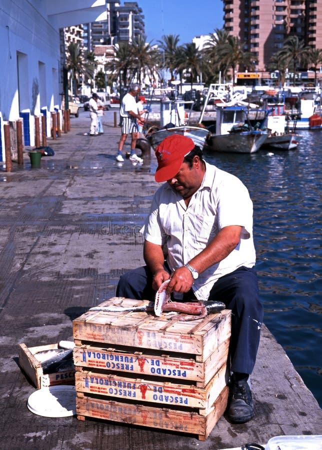 Patroszyć ryba w porcie, Fuengirola zdjęcie stock