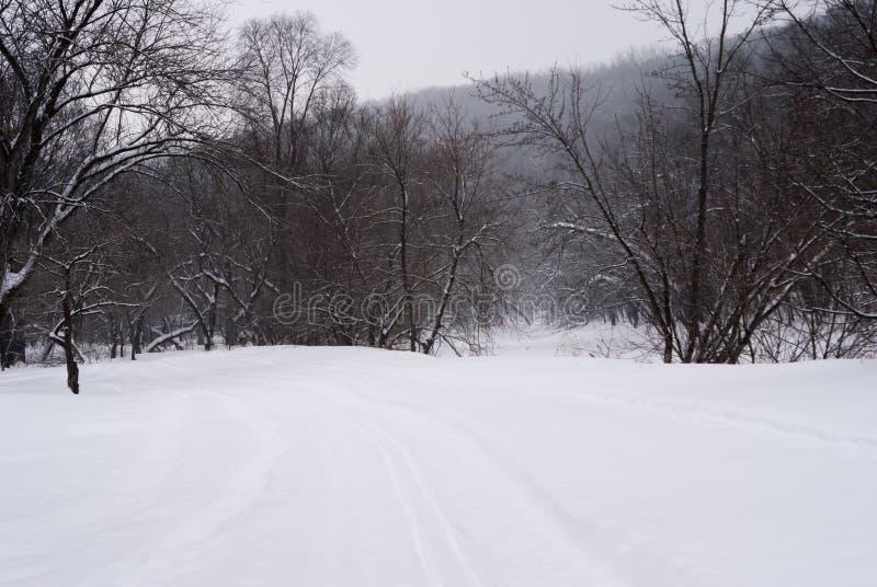 Patrzeć w dół przecinającego kraju narciarskiego ślad przy śniegiem zakrywał drzewa zdjęcie stock