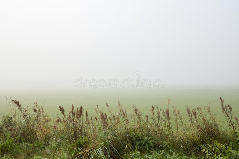 Patrzeć nad mglistym polem z wysoką trawą w przedpolu zdjęcie royalty free