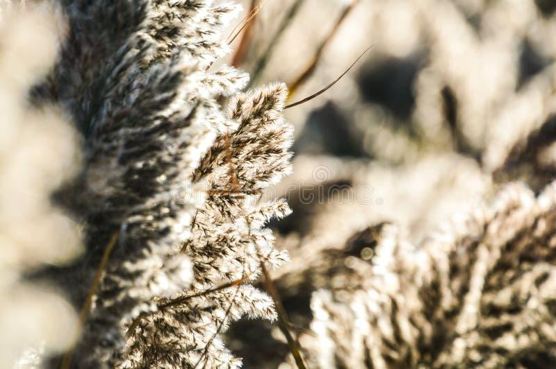 Patrzeć przez wysokich bagno traw fotografia stock