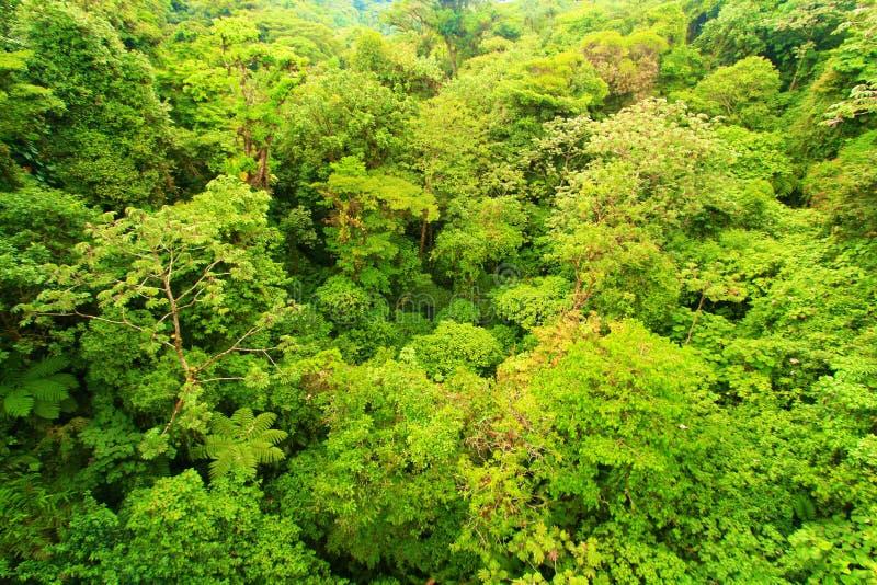 Patrzeć w dół na lesie zdjęcie stock