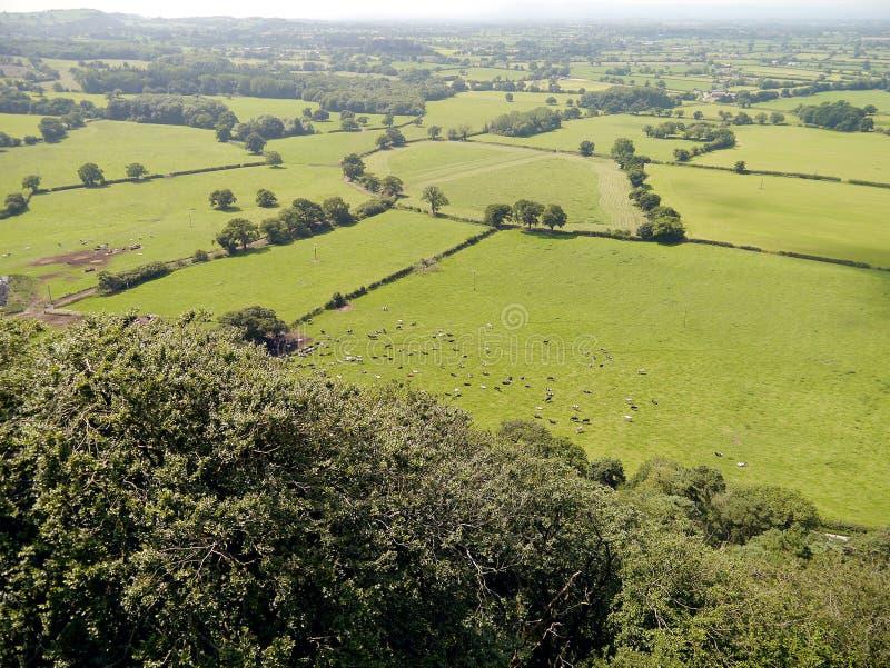 Patrzeć w dół na polu krowy obrazy stock