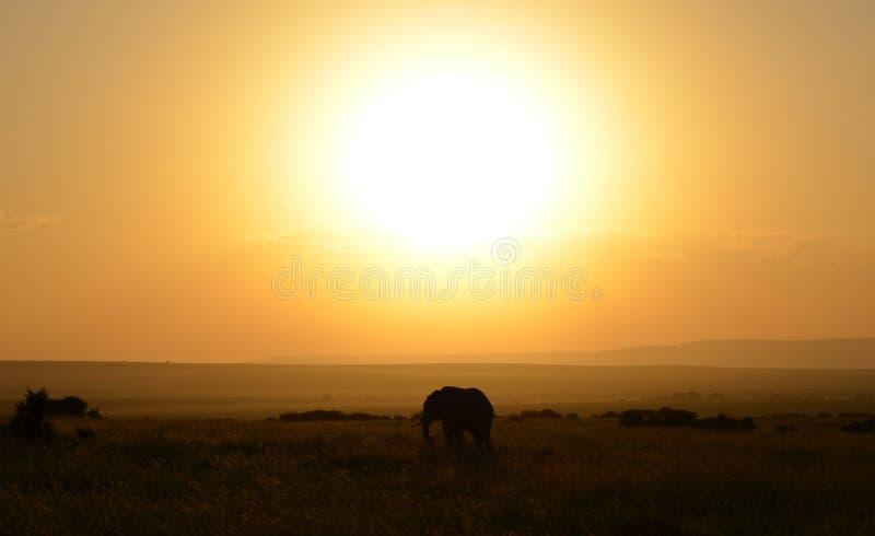 Patrzeje ten słonia! zdjęcia stock