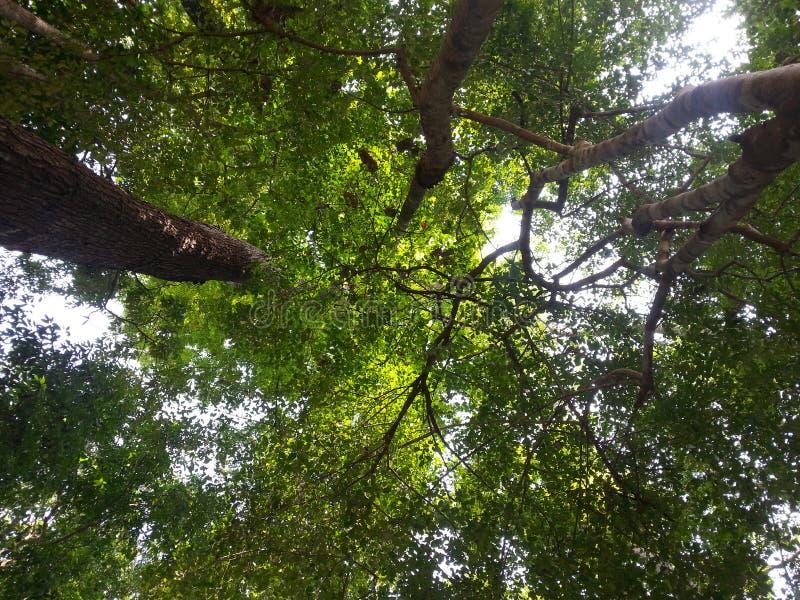 Patrzeje up w lesie fotografia royalty free