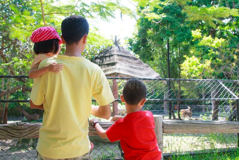 Patrzeje zwierzęcia przy zoo zdjęcie royalty free