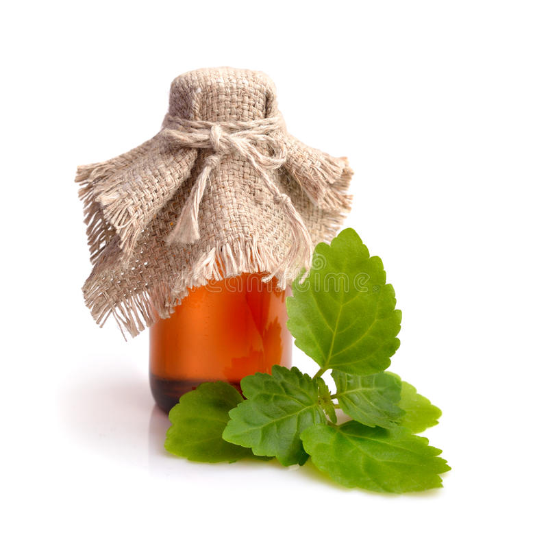 Patschulipflanzenzweig mit ätherischem Öl lizenzfreies stockbild