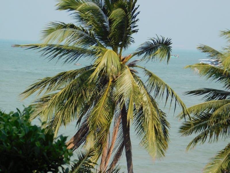 Pattaya stockbilder