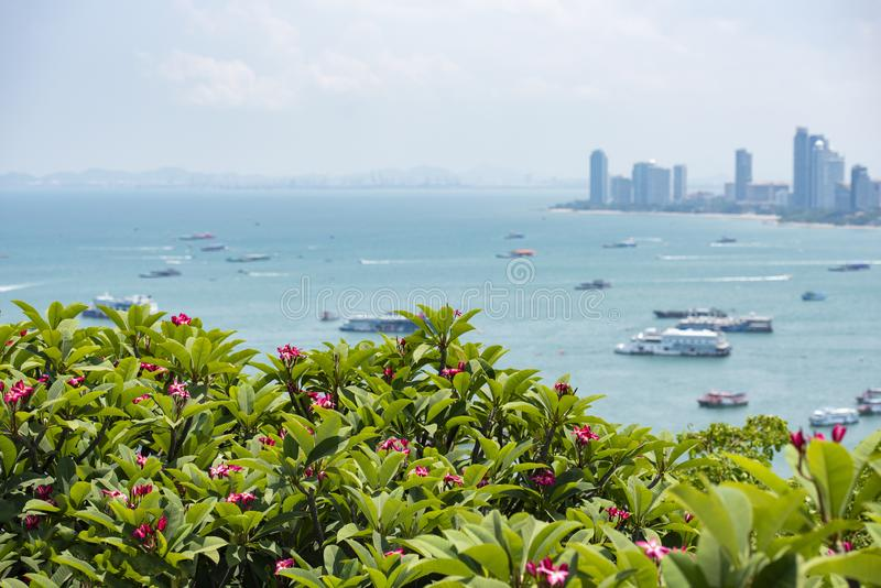 Pattaya city view point / Pink plumeria or frangipani flower on hill with pattaya beach sea and harbor landmark travel stock photography