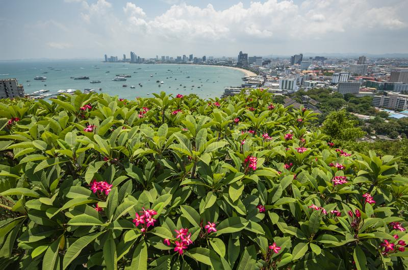 Pattaya cityscape view point / Pink plumeria or frangipani flower on hill with pattaya beach sea and harbor royalty free stock photography