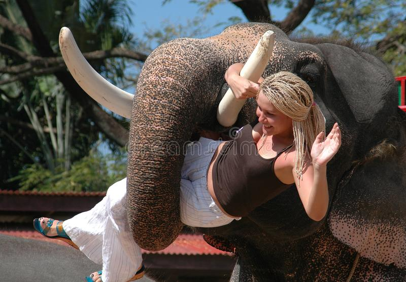 Pattaya, Tailandia: Donna della holding dell'elefante fotografia stock