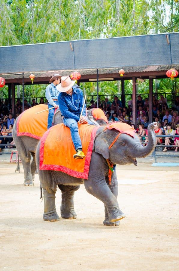 Pattaya Thailand:  Elefantdansshow. royaltyfri fotografi