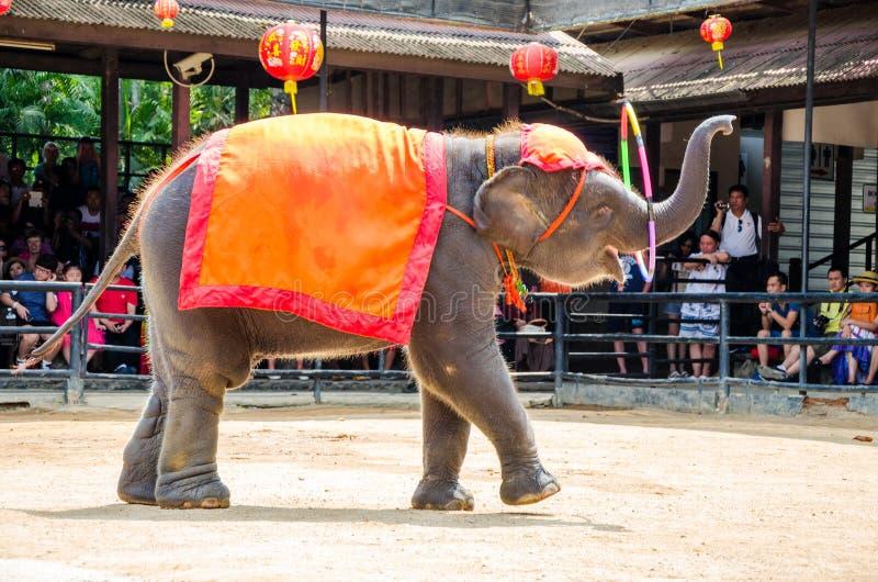 Pattaya, Thailand : Elephant dance hula hoop show. Elephant playing show dance and hula hoop at nongnooch garden Pattaya, Thailand royalty free stock image