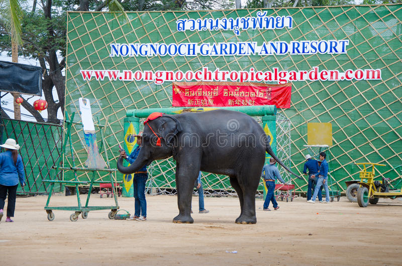 Pattaya, Thailand : Elephant painting show. stock photos