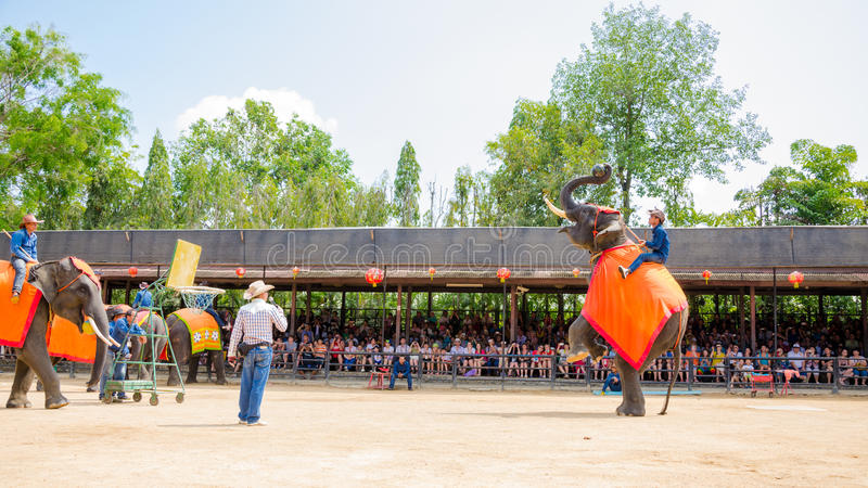 Pattaya, Thailand : Elephant playing Basketball show. Elephant playing show Basketball at nongnooch garden Pattaya, Thailand royalty free stock images
