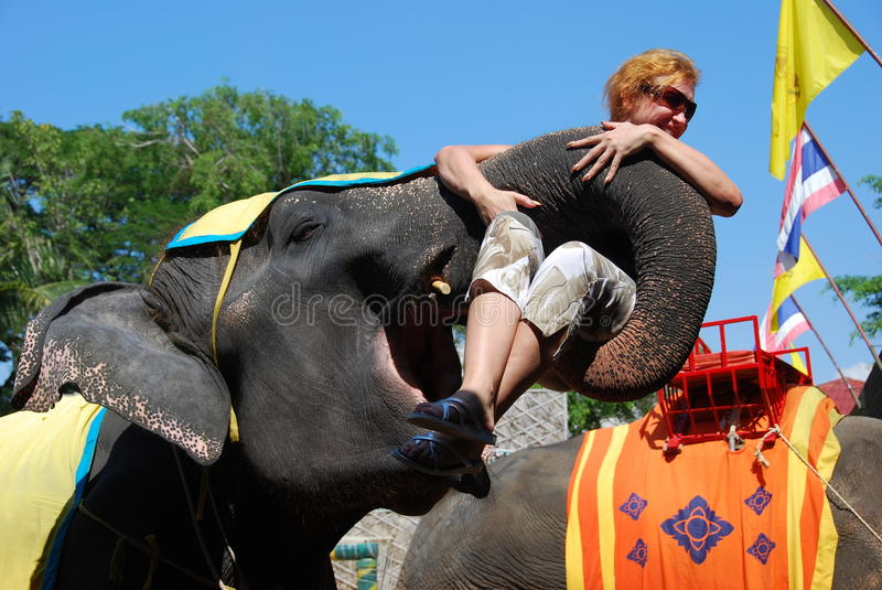 Pattaya, Thailand: Elephant Show. Woman gets hoisted into the air in an elephant's trunk at the conclusion of the spectacular Nong Nooch Tropical Gardens stock images