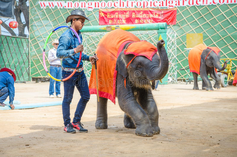 Pattaya, Thailand : Elephant show. stock photos