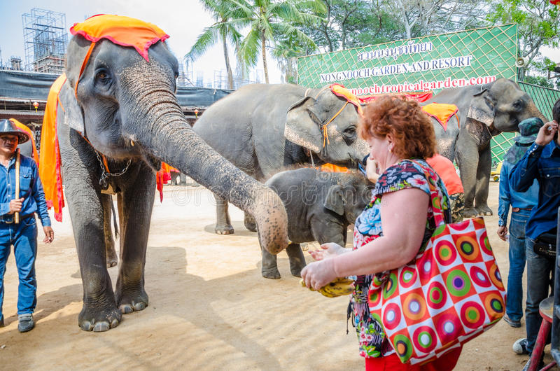 Pattaya, Thailand : Elephant show. stock images