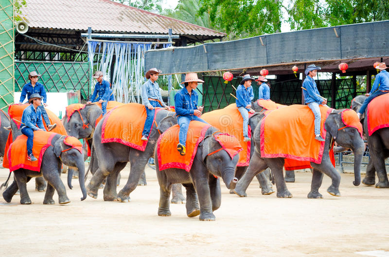 Pattaya, Thailand : The famous elephant show. stock photo