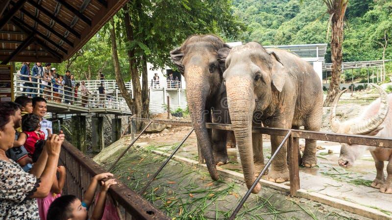 PATTAYA, THAILAND - Oktober 14, 2017: De mensen komen aan de dierentuin de olifanten, Thaise olifant in de dierentuin voeden illu stock fotografie