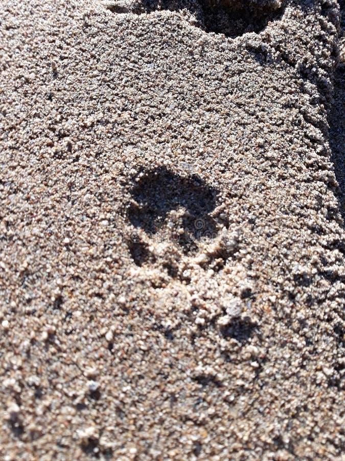Patte de chien dans le sable photos libres de droits