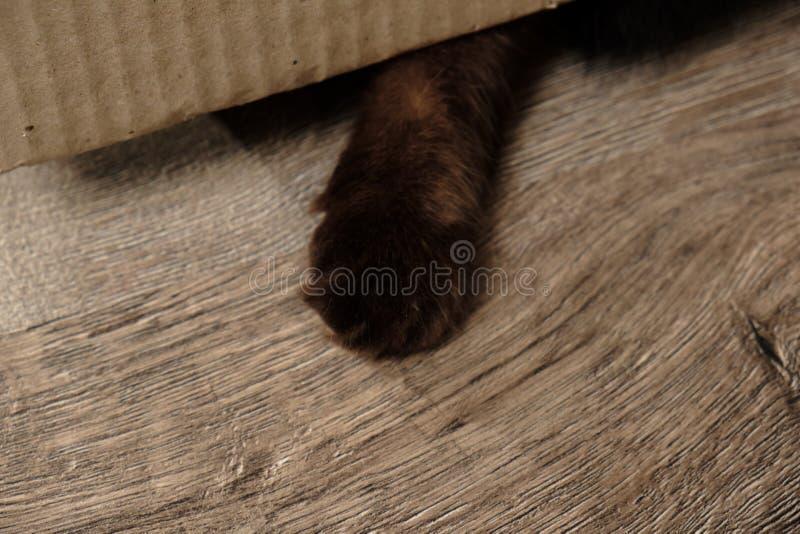 Patte drôle de chat photographie stock