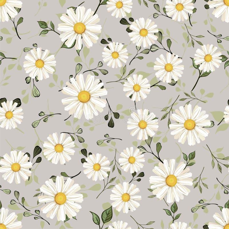Pattern. seamless. White daisies. daisy, flower royalty free stock photos