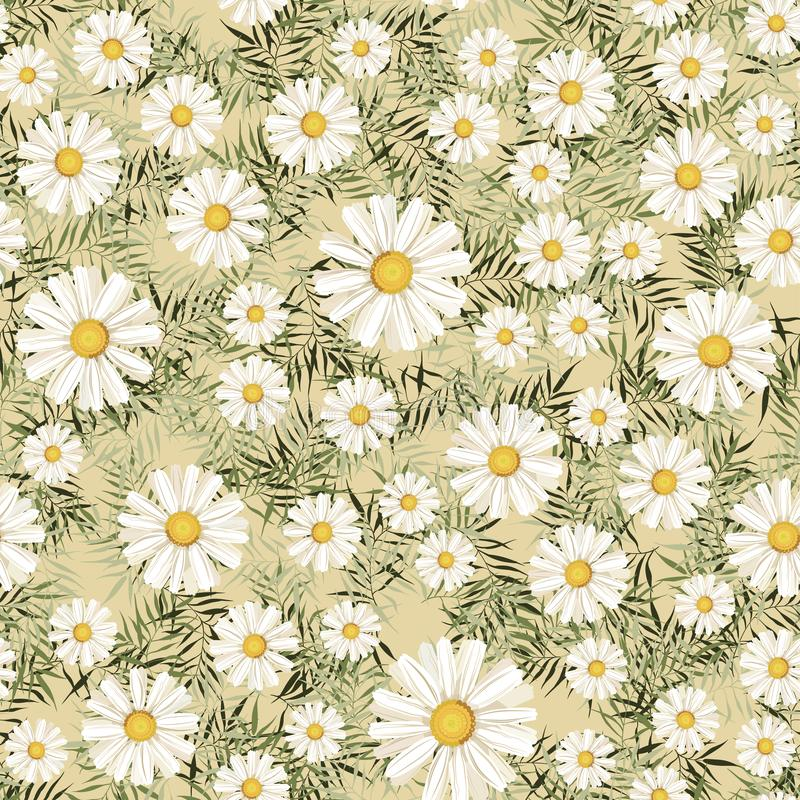 Pattern. seamless. White daisies. daisy, flower royalty free stock photography